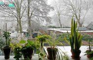 راهکارهایی برای محافظت از گیاهان آپارتمانی در برابر سرما