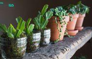 10 نمونه از گیاهان مناسب سرویس بهداشتی و حمام