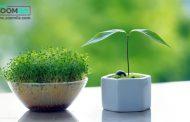 انواع بذر برای کاشت سبزه عید + زمان کاشت هر کدام
