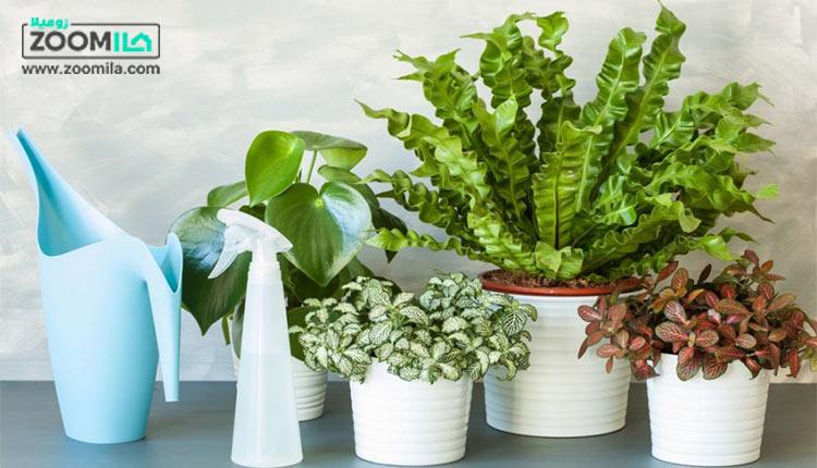 پرفروش ترین گل های آپارتمانی + روش نگهداری آنها