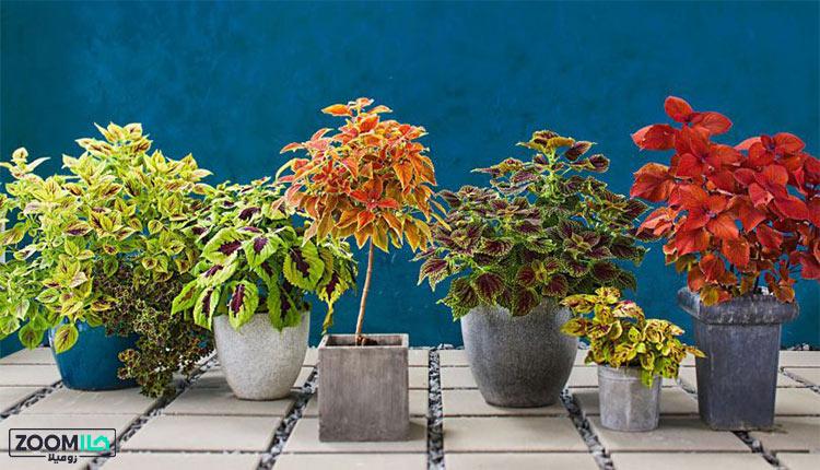 پرفروش ترین گل های آپارتمانی