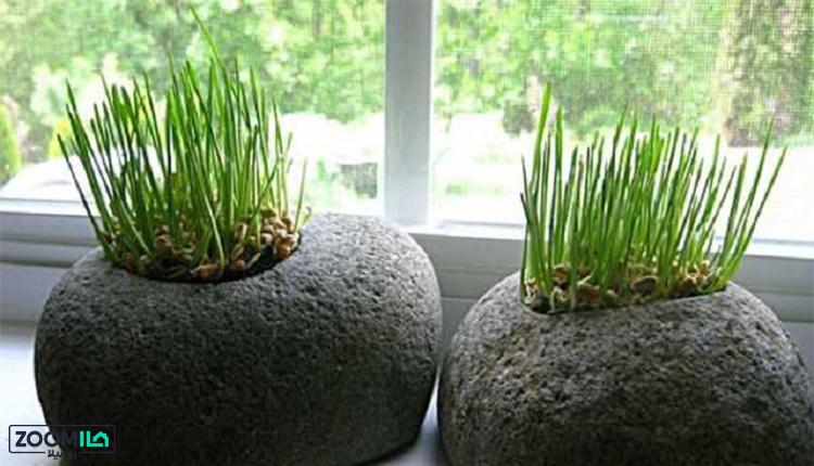 انواع بذر برای کاشت سبزه عید