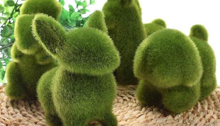 نحوه کاشت سبزه عید با خاکشیر به شکل خرگوش