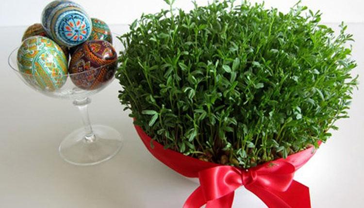 همهچیز درباره کاشت سبزه عید با بذرهای مختلف